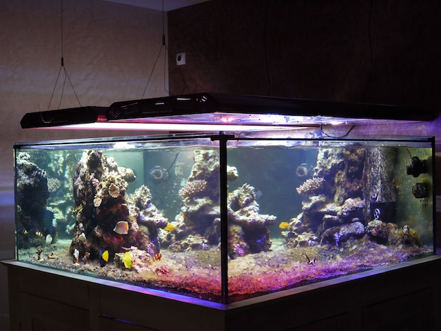 recifal r cifal reef rampe eclairage aquarium leds de puissance. Black Bedroom Furniture Sets. Home Design Ideas